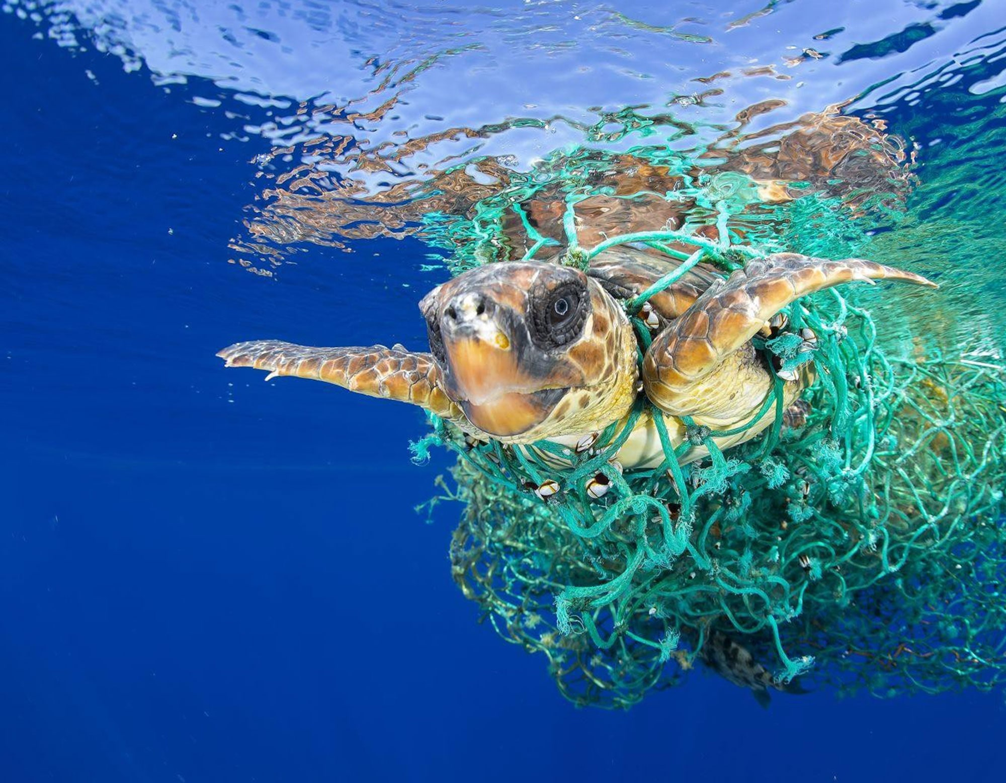 Save the turtles with Eco-friendly yoga wear made from recycled plastic bottles